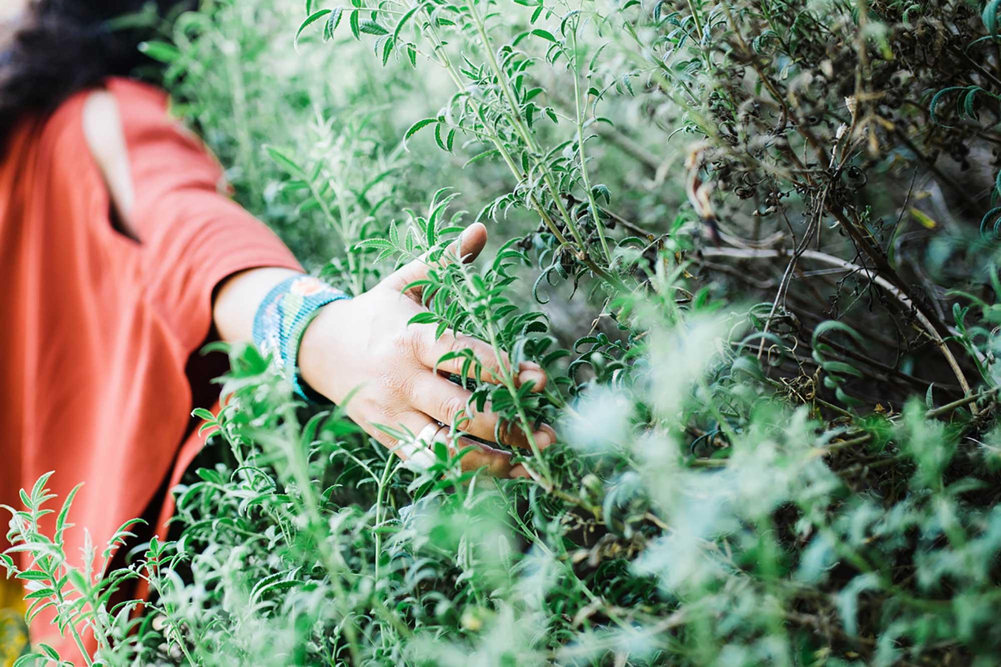 berenice dimas herbalist